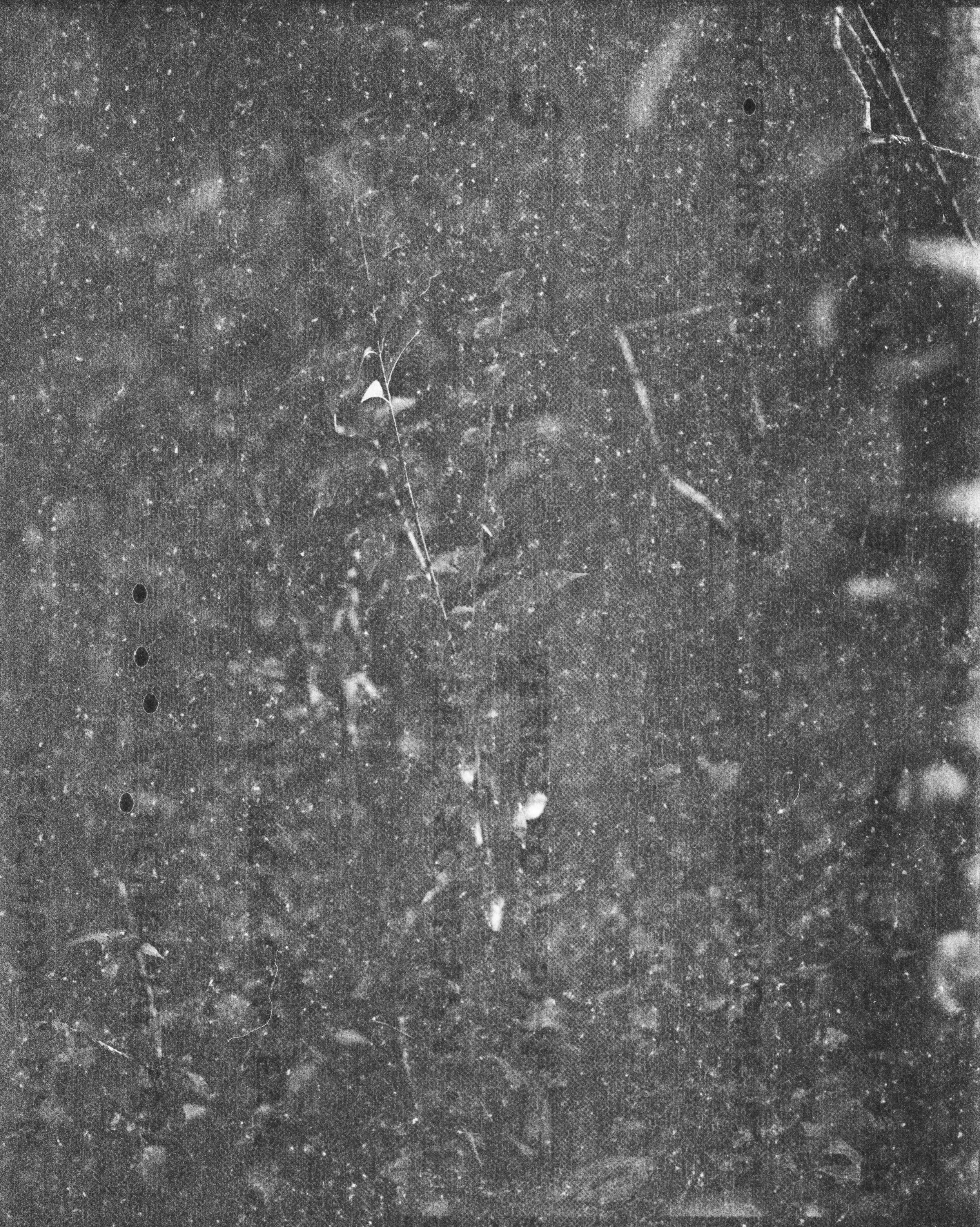 lydiasee-creekoffspringdale2014-color120mm-batch143.JPG