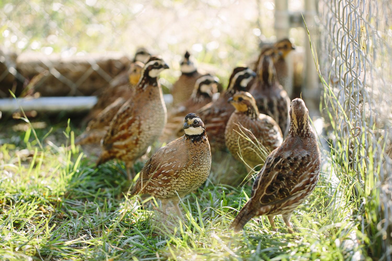 snouffer_family_farm-42.jpg