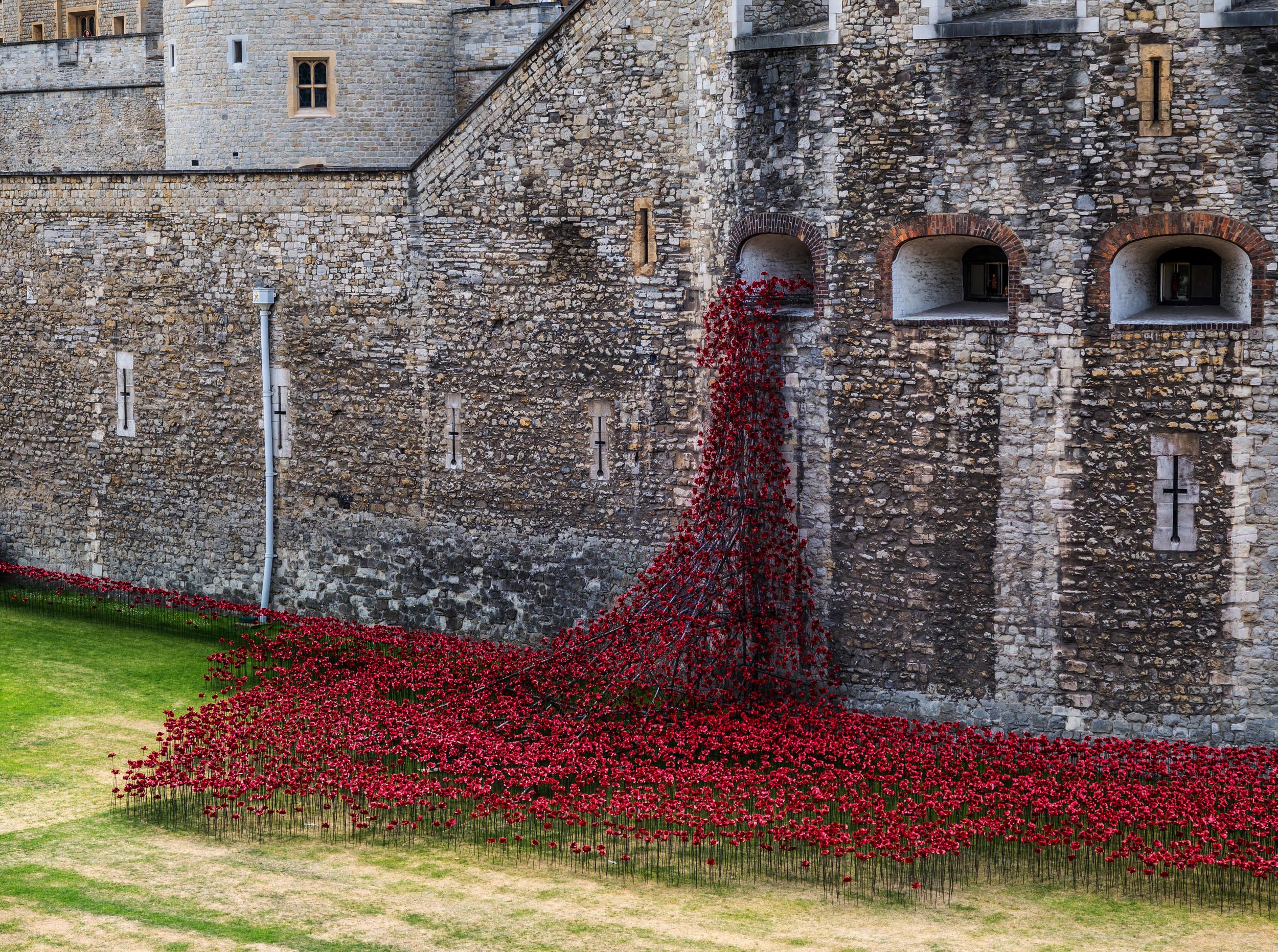 Tower Poppies.jpg