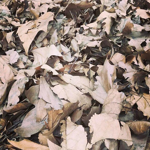 Fallen leaves 🍃🍁🍂