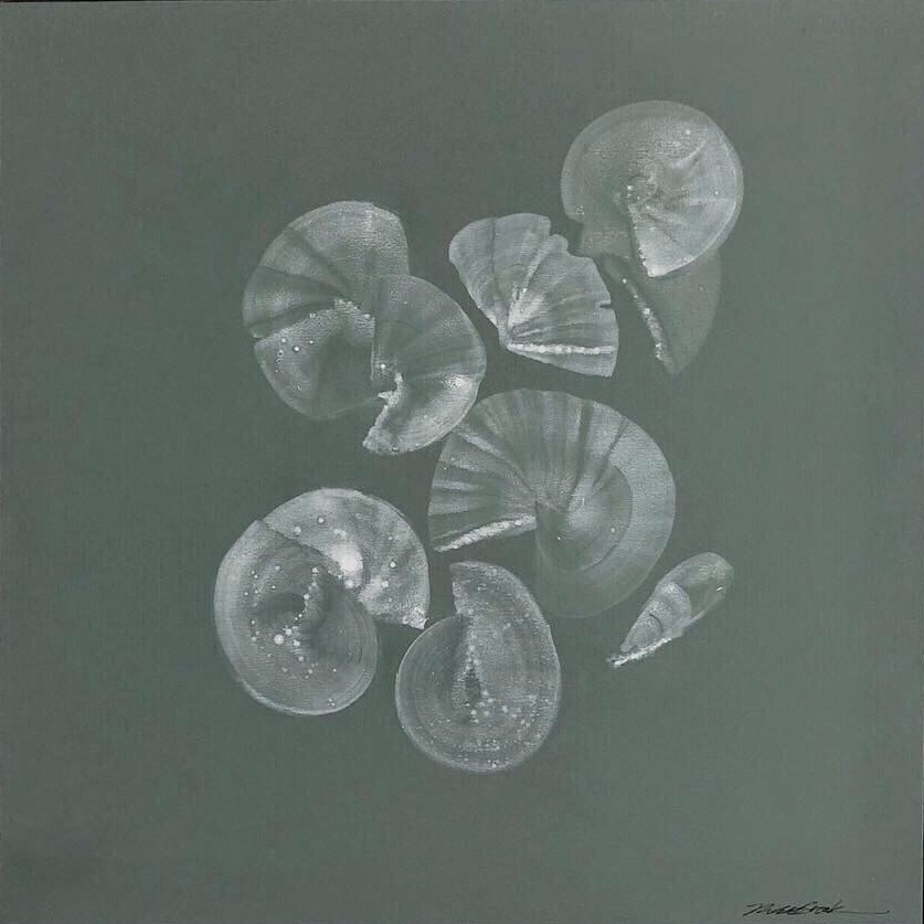 Abstract Shells 1 - Green Ground#Acrylic on panel#14 x 14 inches#$600