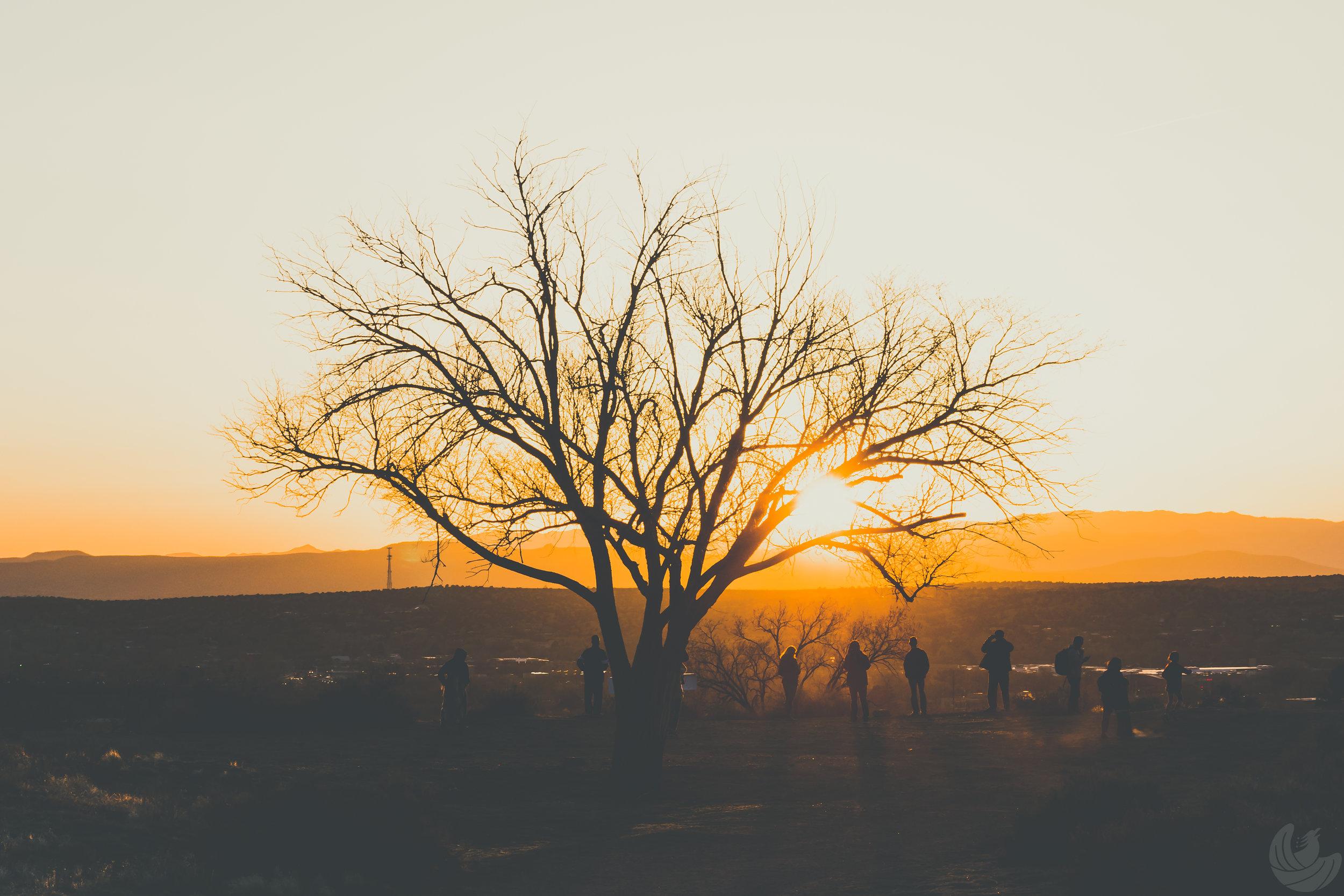 Treeoflife-1.jpg