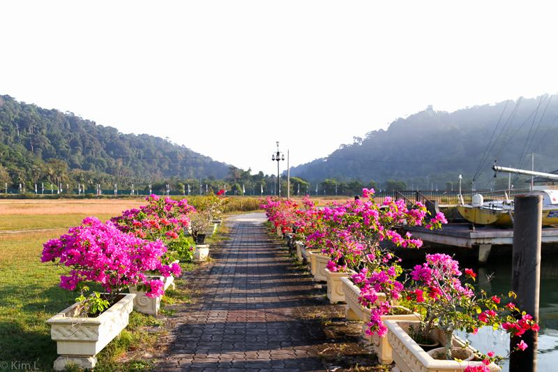 Langkawi-field-8.jpg