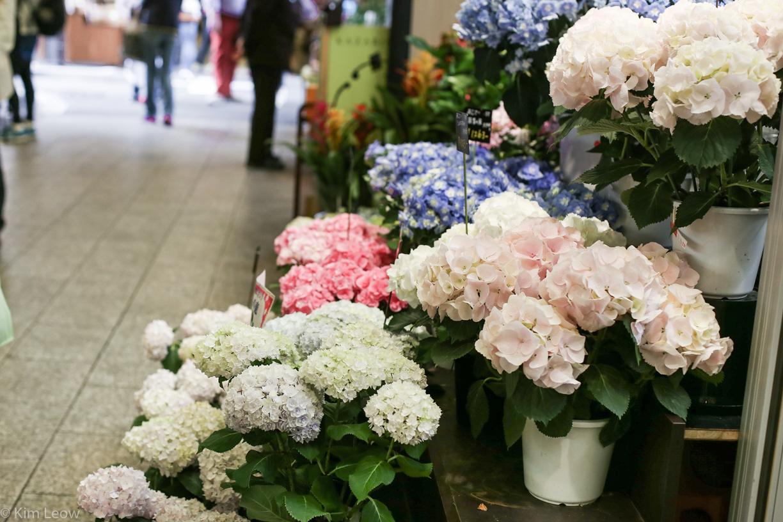 kimleow_cherryblossom_kyoto_travel-14.jpg