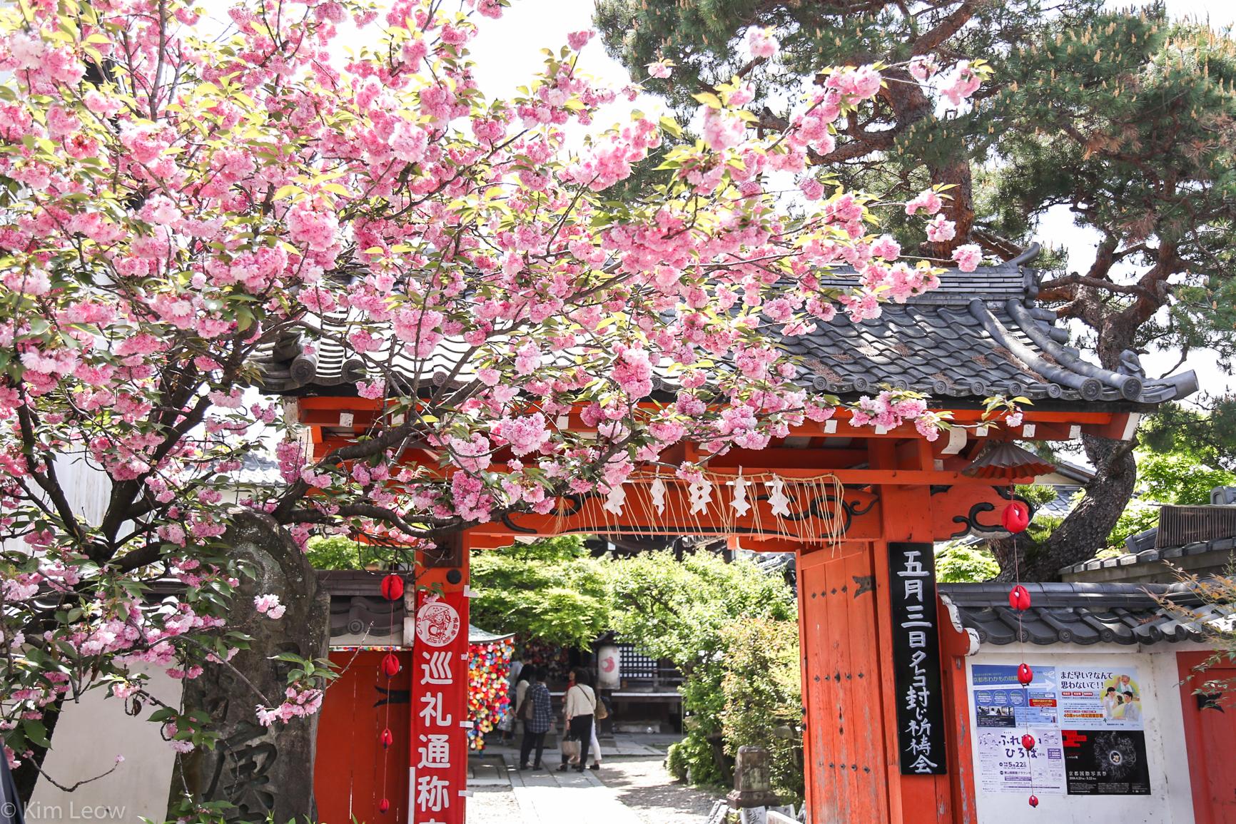 kimleow_cherryblossom_kyoto_travel-8.jpg