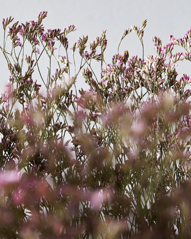 Detail | Pink sea lavender
