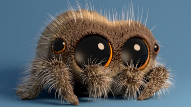 1045329-fresh-tv-expand-lucas-spider-web-videos.jpg