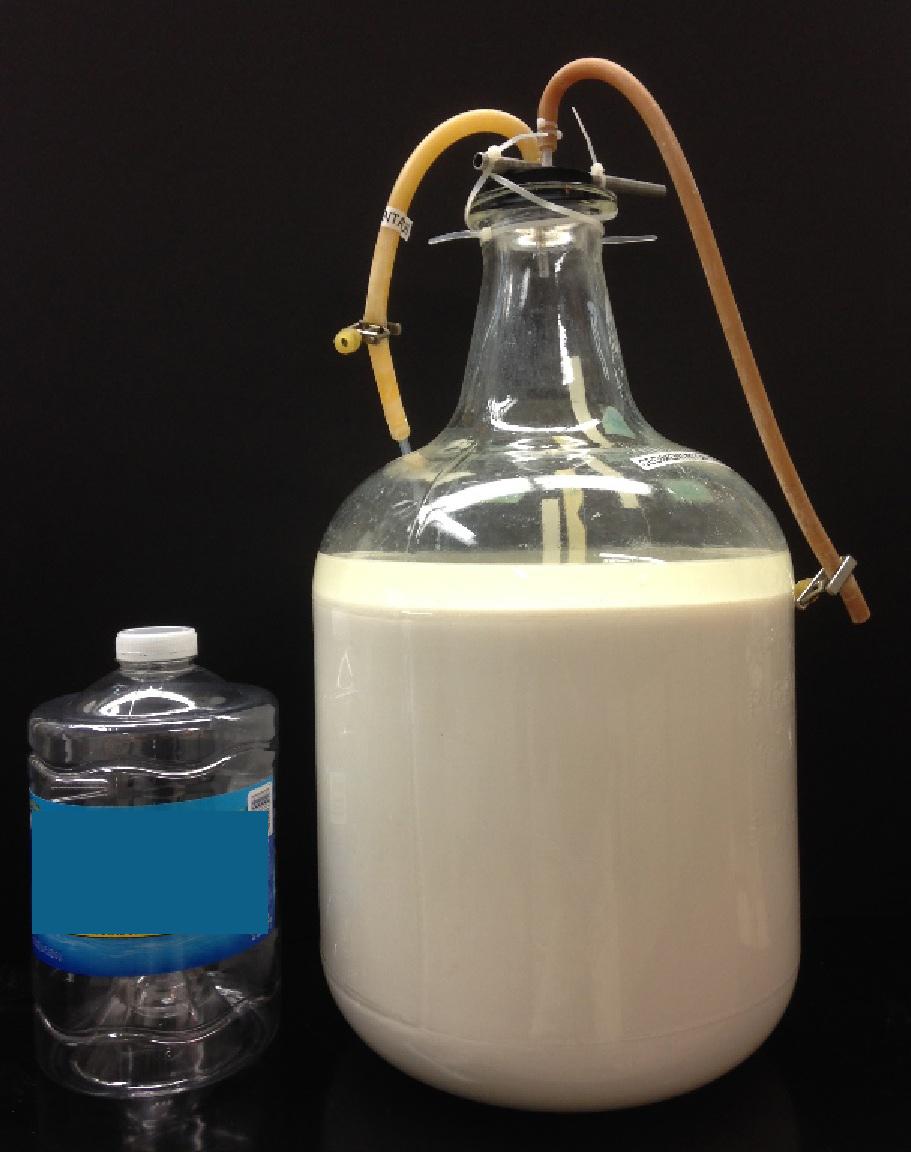 20L of fermentation mixture ready for nanoparticle separation. Photocourtesy of Oak Ridge National Laboratory.