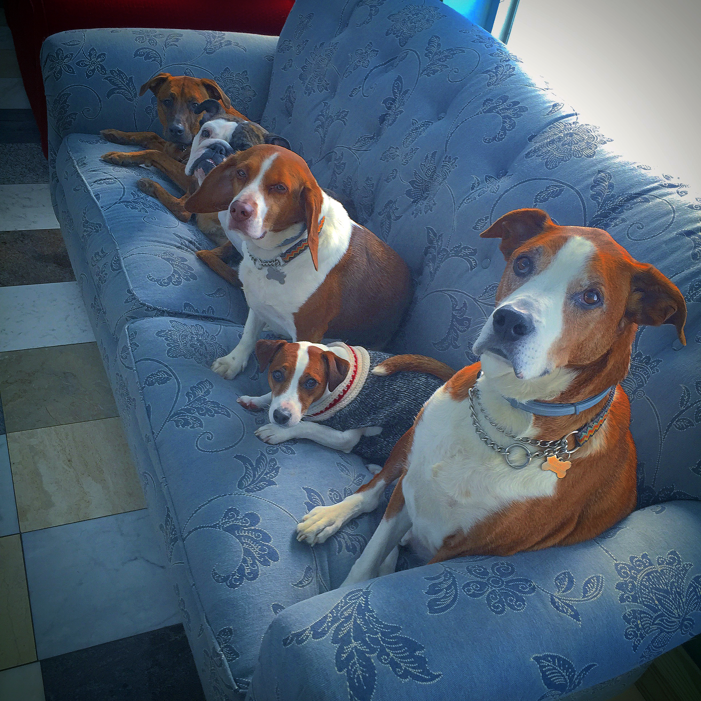 dogs-on-couch.jpg