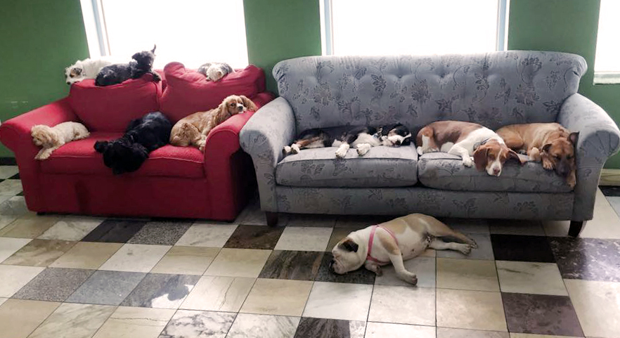 group-of-dogs-on-couch.jpg