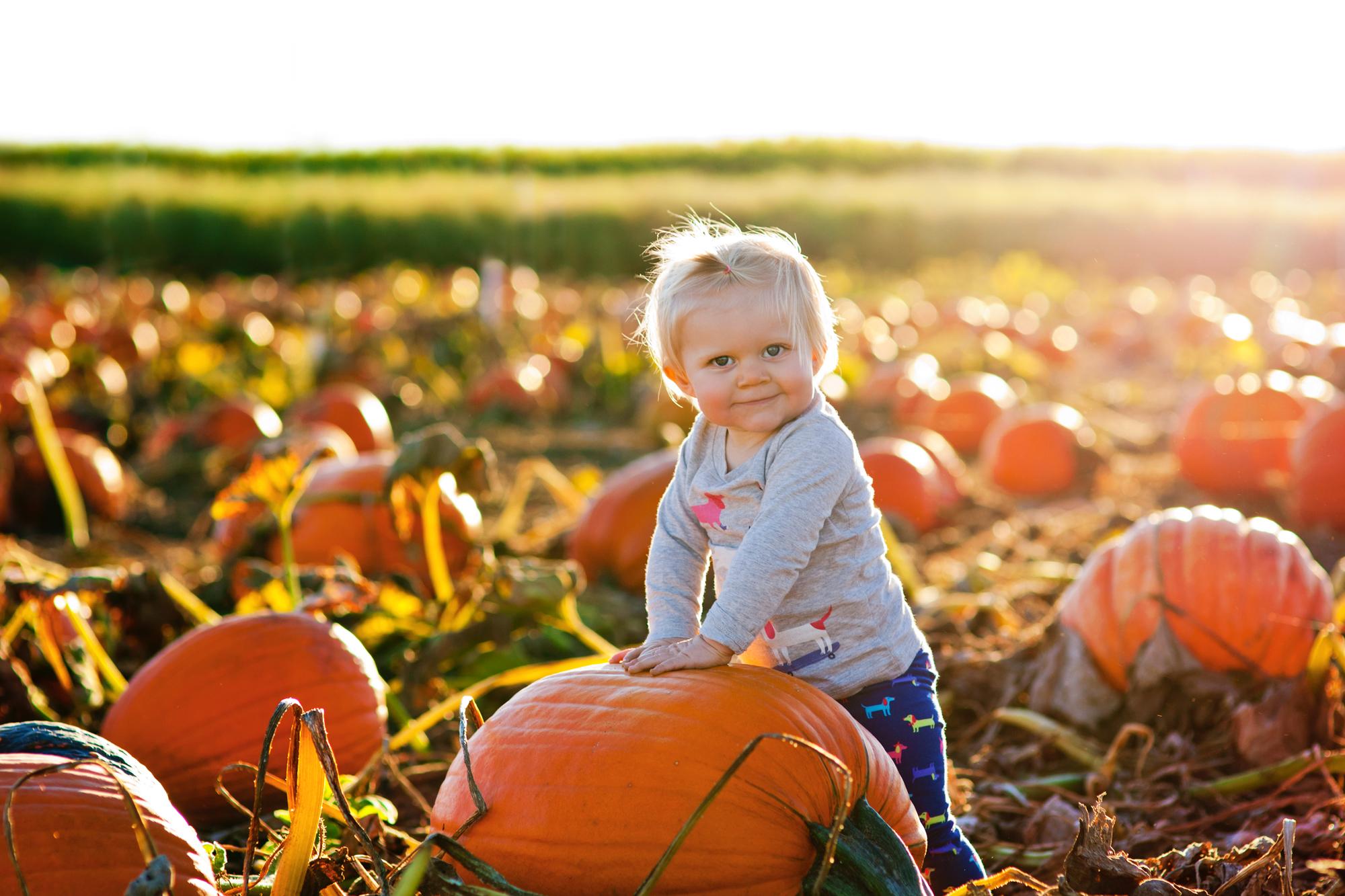 Lauren-Pumpkin-111016.jpg