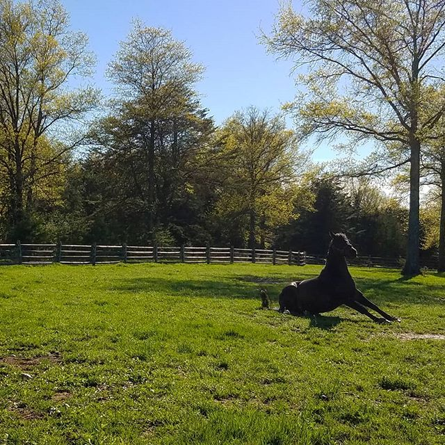 Smokey stretching his legs for show season! Entries open May 24 for RTF June Recognized Shows