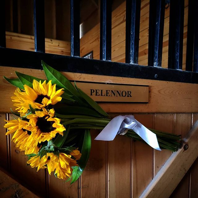 Our hearts are heavy as we said goodbye to Pelennor yesterday. He loved his humans and taught those of all ages how to enjoy the ride! Rest in Peace 'Perfect-Pel'! ❤