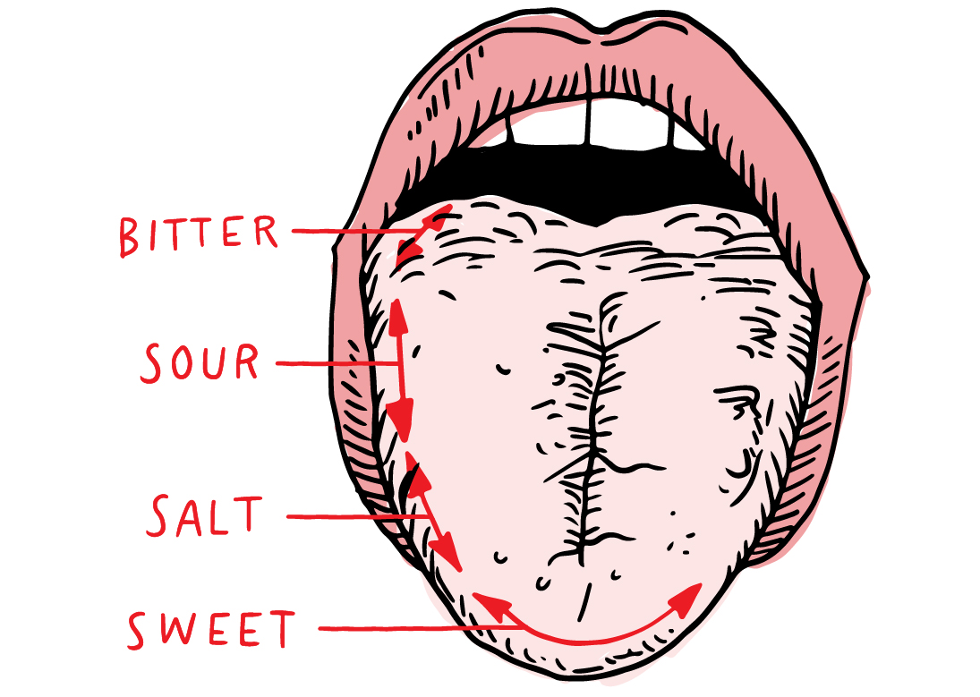 learn_page_images_3_mouth.jpg