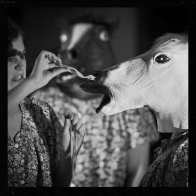 LAMENESS OF A HORSE