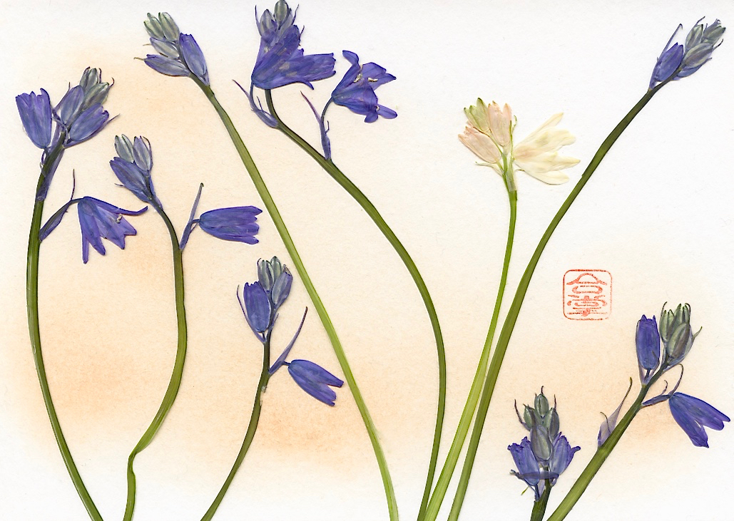 blue and white stems with ornage bg.jpg