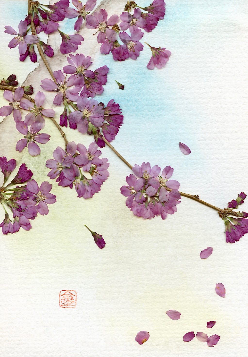 pink sakura with tree 2017.jpg