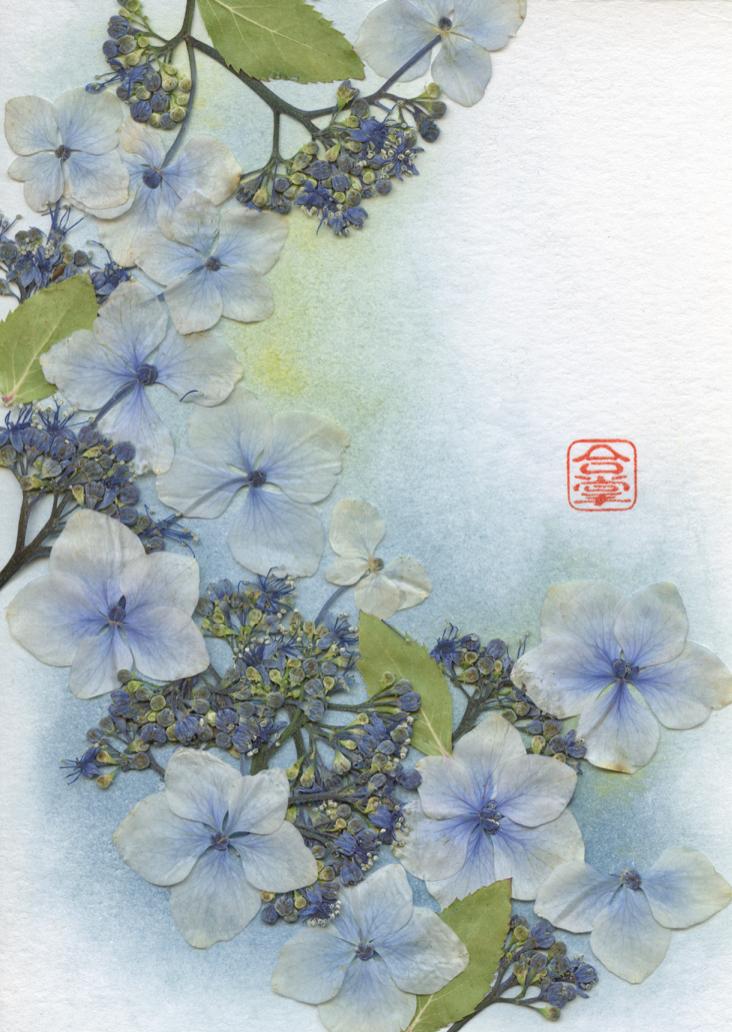 blue hydrangeas 2017.jpg