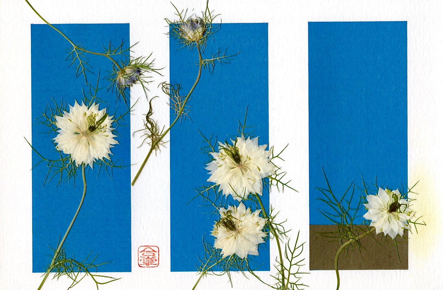 nigella with blue pannels (1).jpg