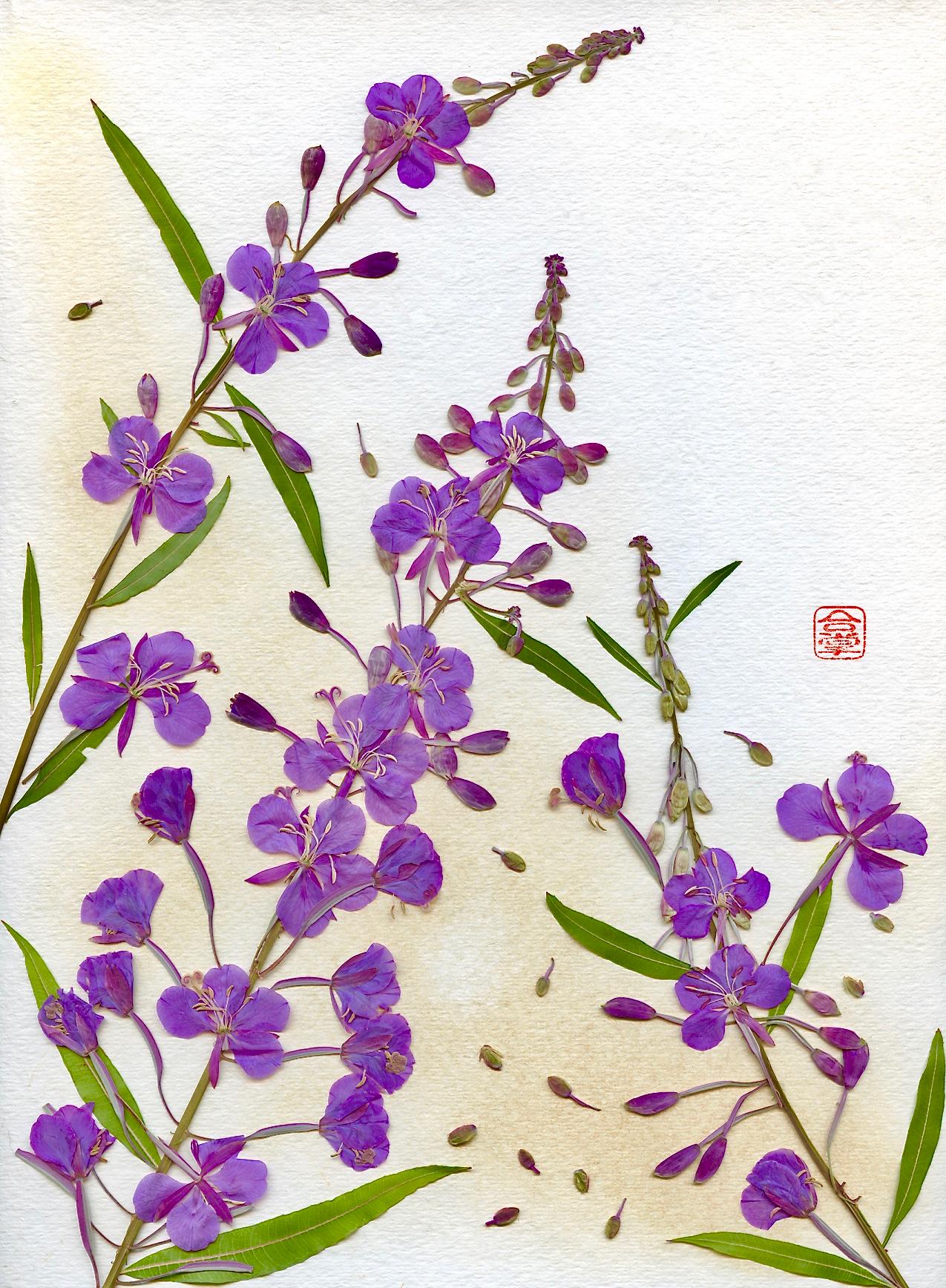 purple flowers summer 2017 (1).jpg