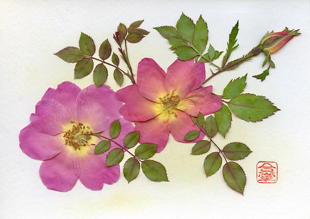 two pink roses.jpg