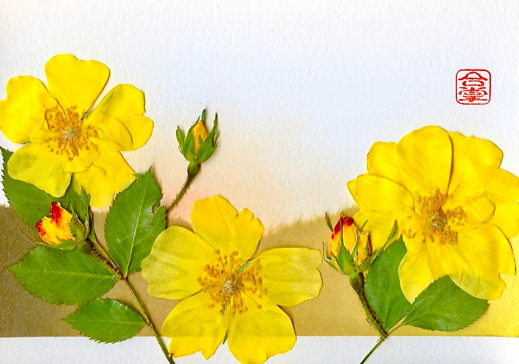 yellow roses 2017.jpg