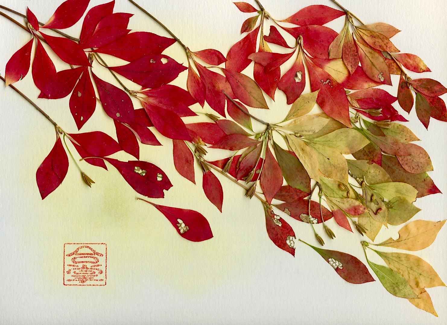 doudan tsutsuji leaves.jpg