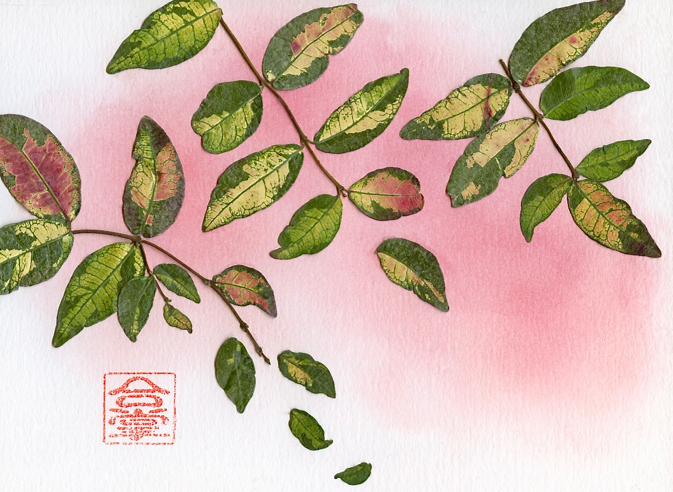 green and red leaves 2017.jpg