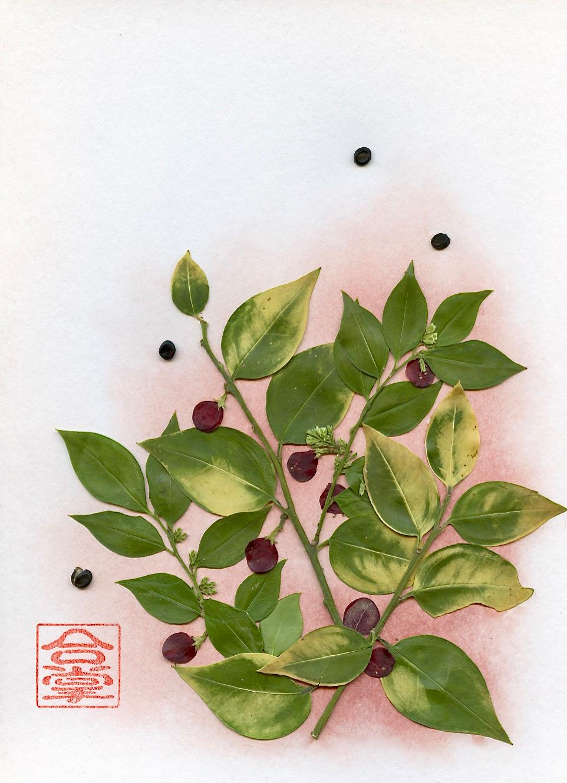 winter leaves with red berries.jpg
