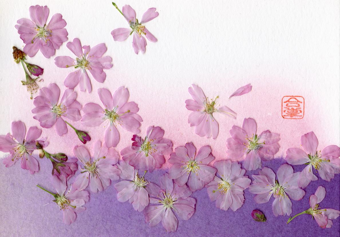 sakura with purple bgd.jpg