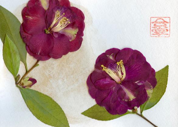two camellias 2018.jpg
