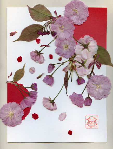 cherry blossoms pink red bgd  2018.jpg