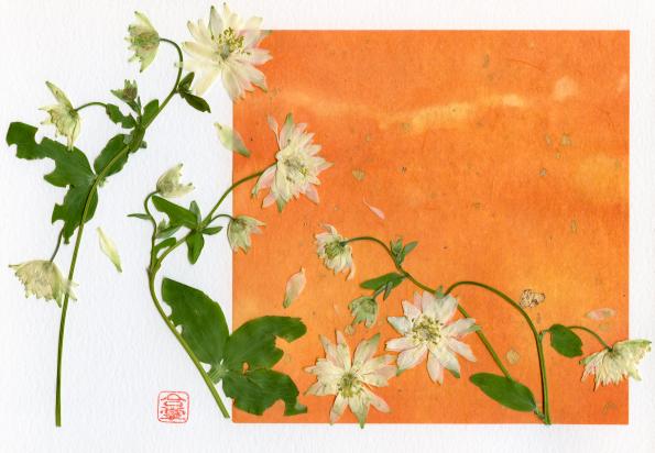 white columbine with orange bgd 2018.jpg