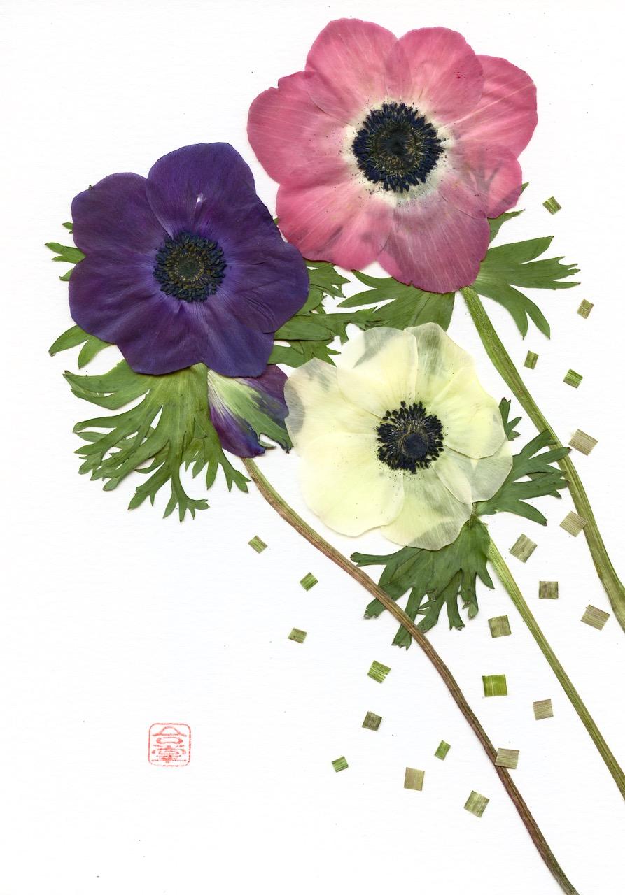 Anemone three colors 2019.jpg