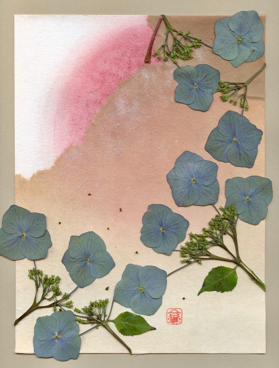 blue purple hydrangea 2018.jpeg