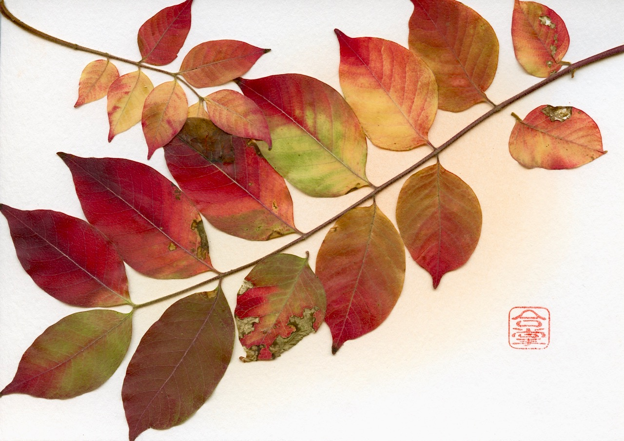 fall leaves 2018.jpg