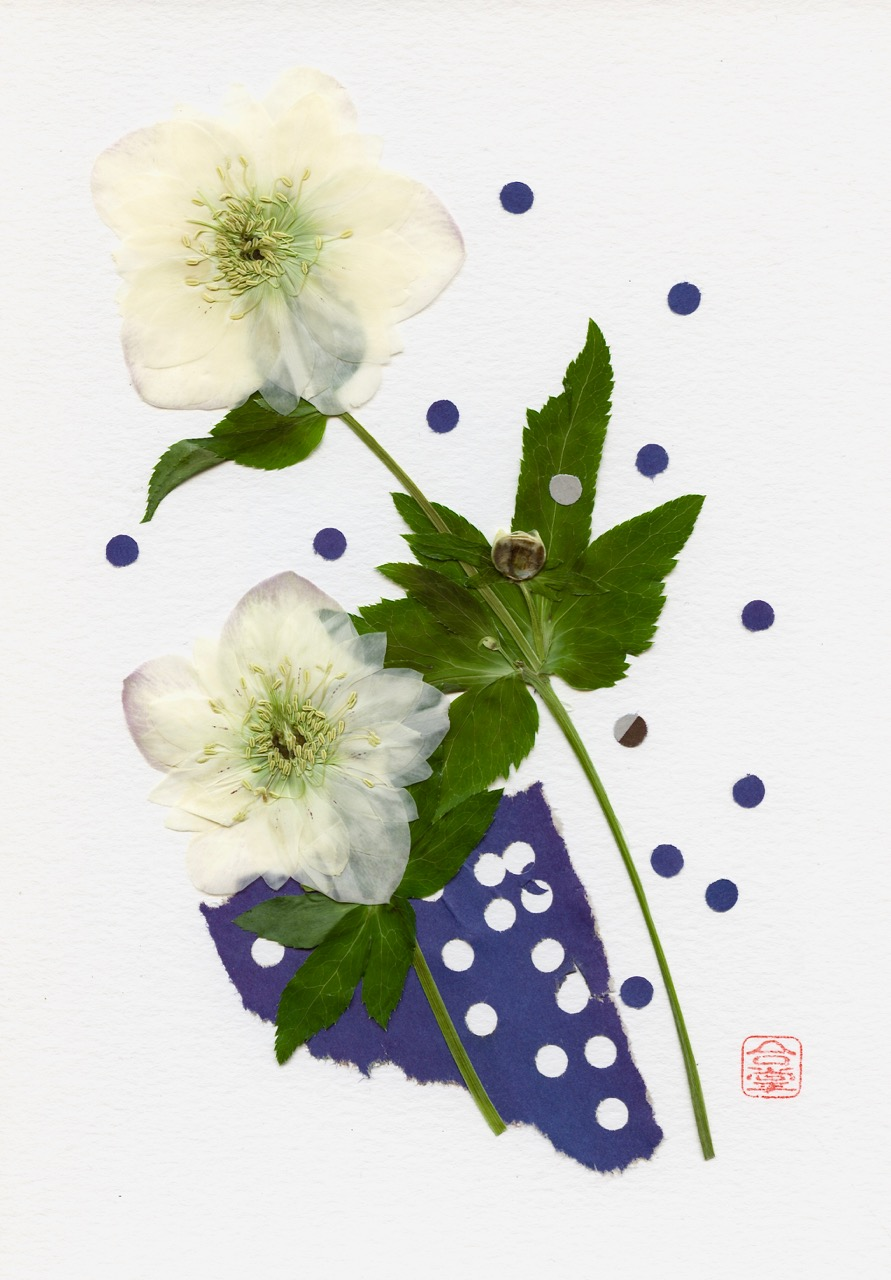 hellebore two white with dots 2019.jpg