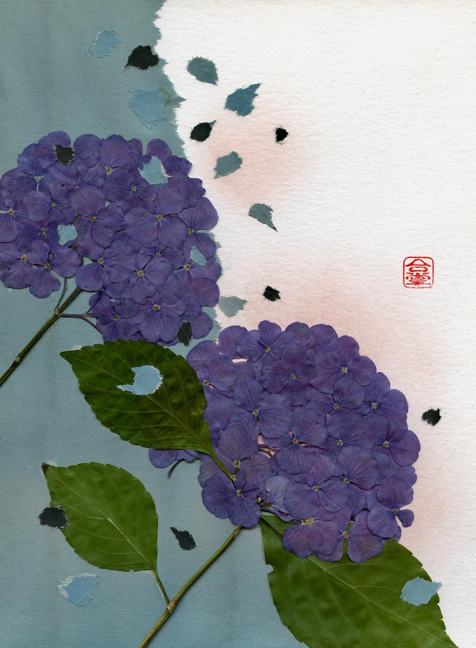 hydrangea two blue 2018.jpg