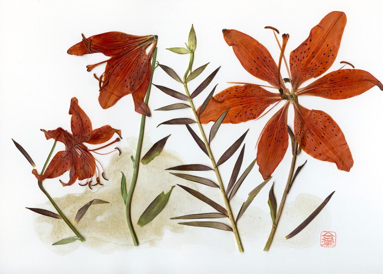 orange lilies 2018.jpg