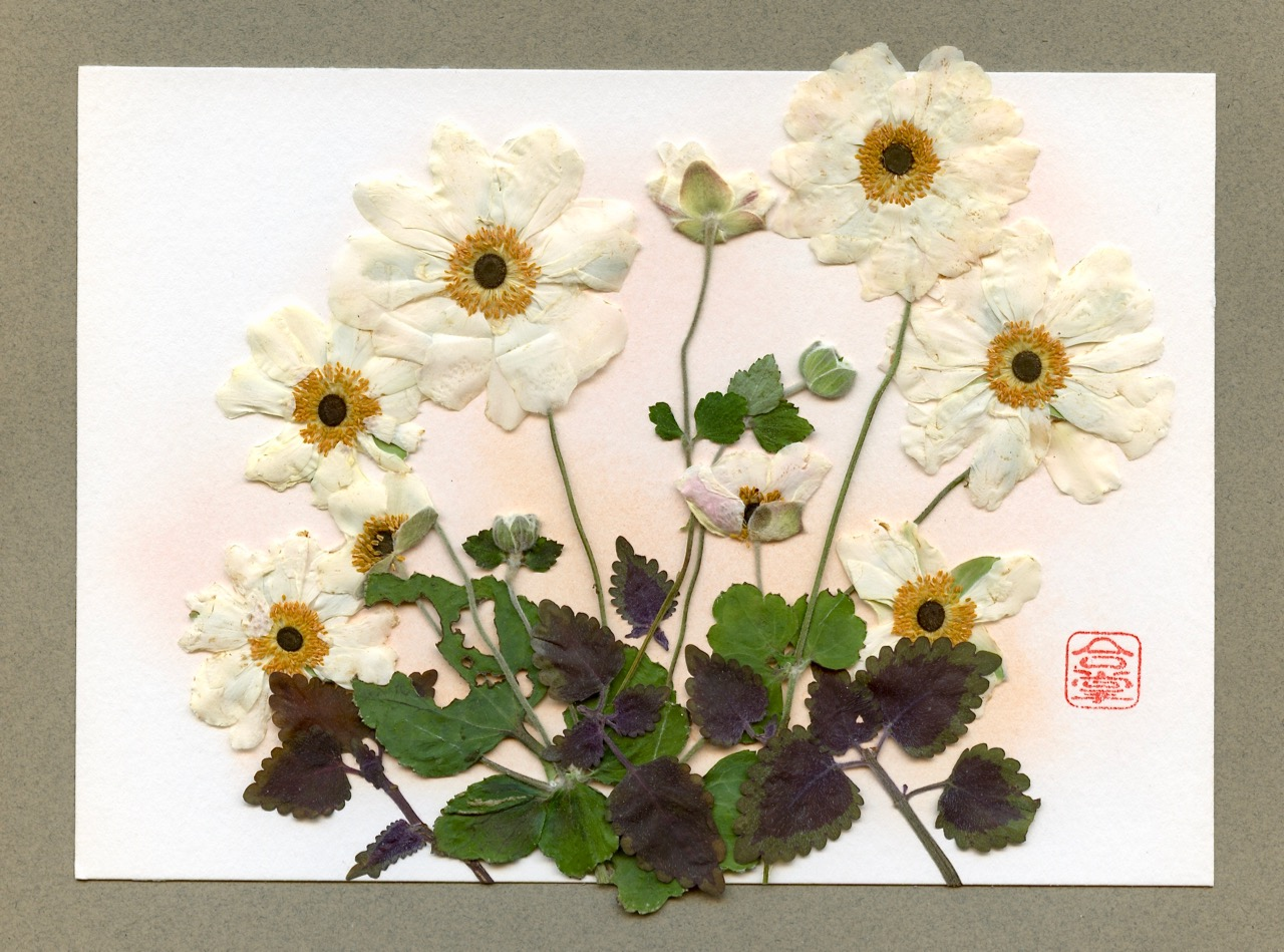 white Japanese anemone 2018.jpg