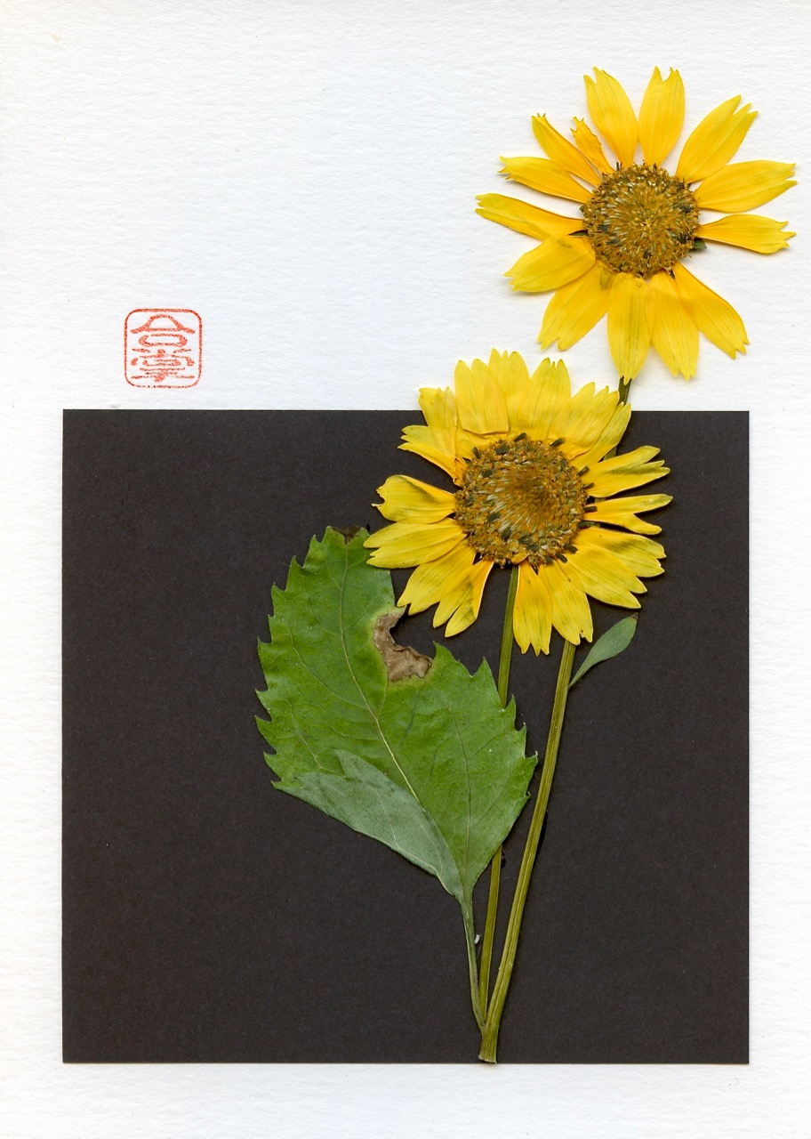 yellow flowers with black square 2018.jpg