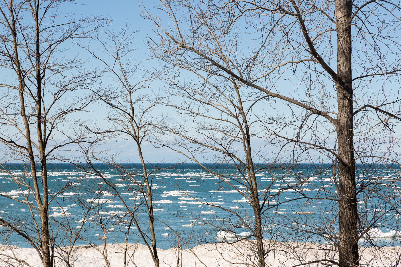 Lake Huron through the Trees
