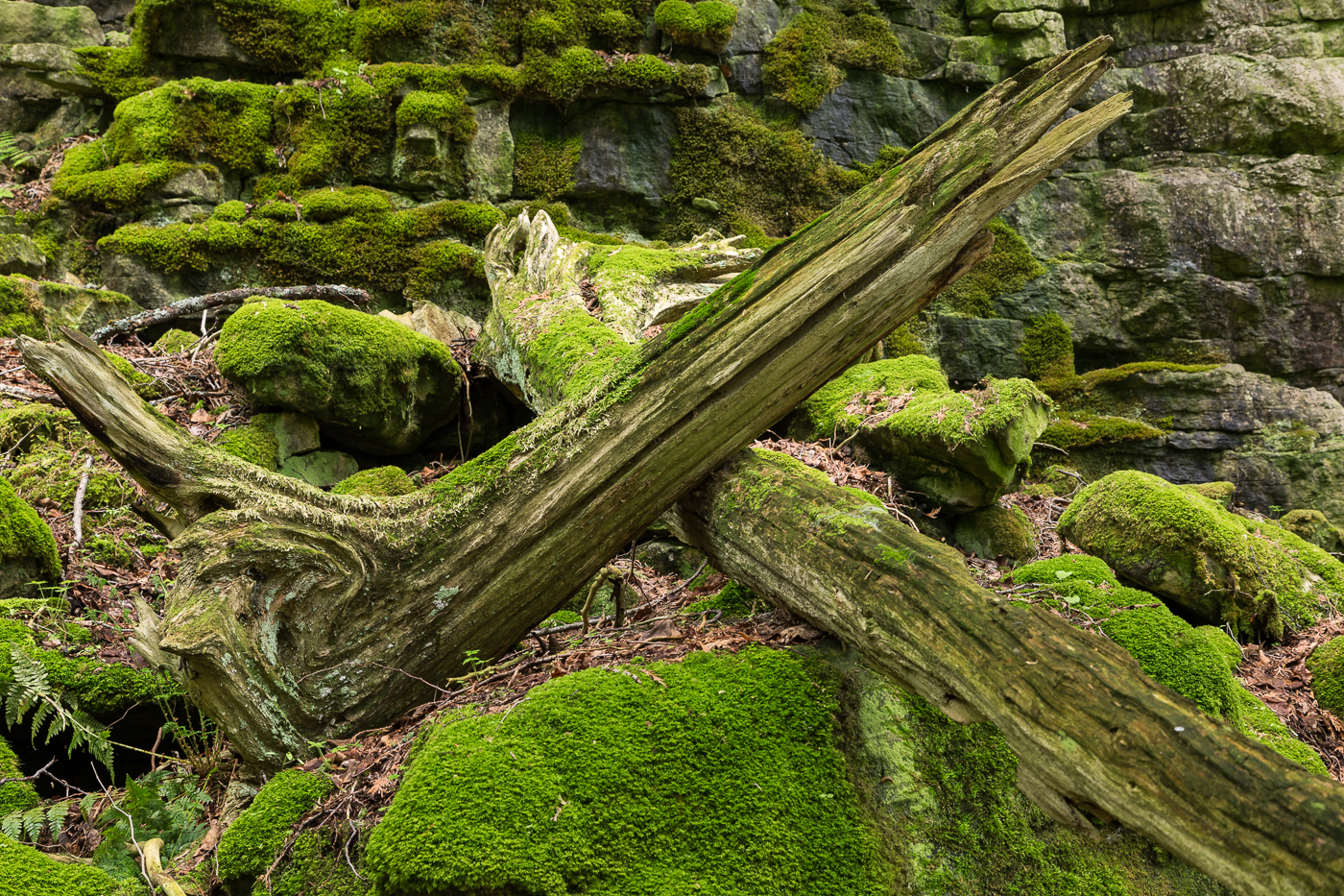 Branch abstracts amid the moss and stones