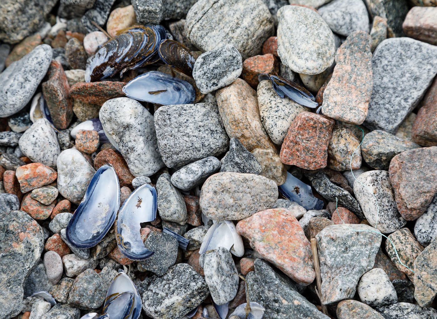 Stones, Shells and a Piece of Twine