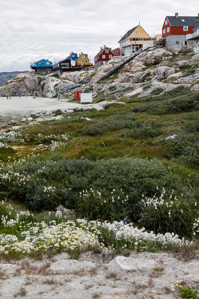 Arctic Cotton, Houses and a Soccer Field in Ilulissat