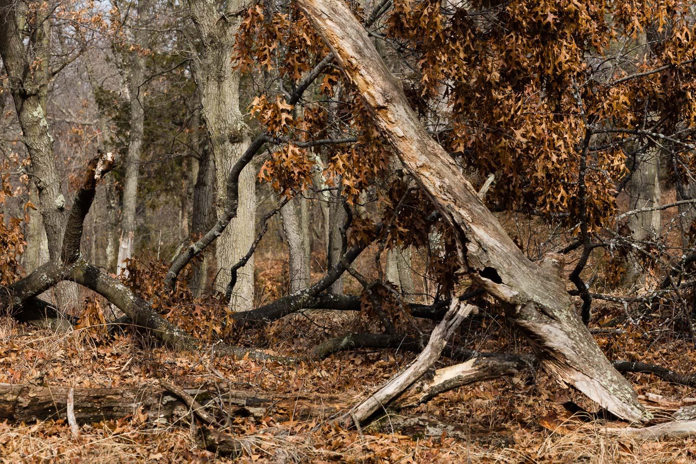 Storm Damaged Trees