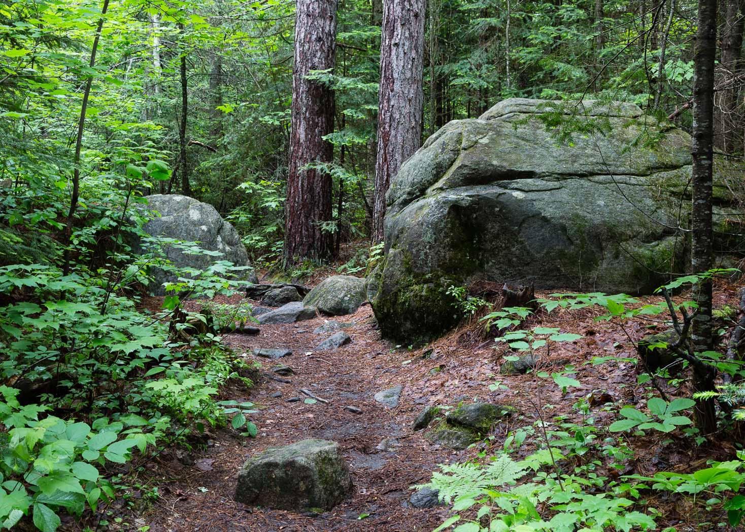 Forest Trail, Algonquin Park