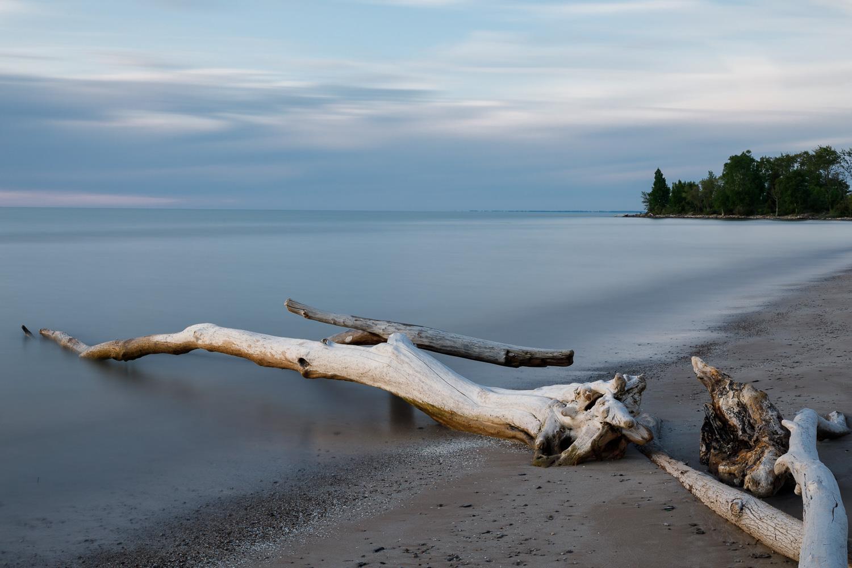 Driftwood Along the Beach