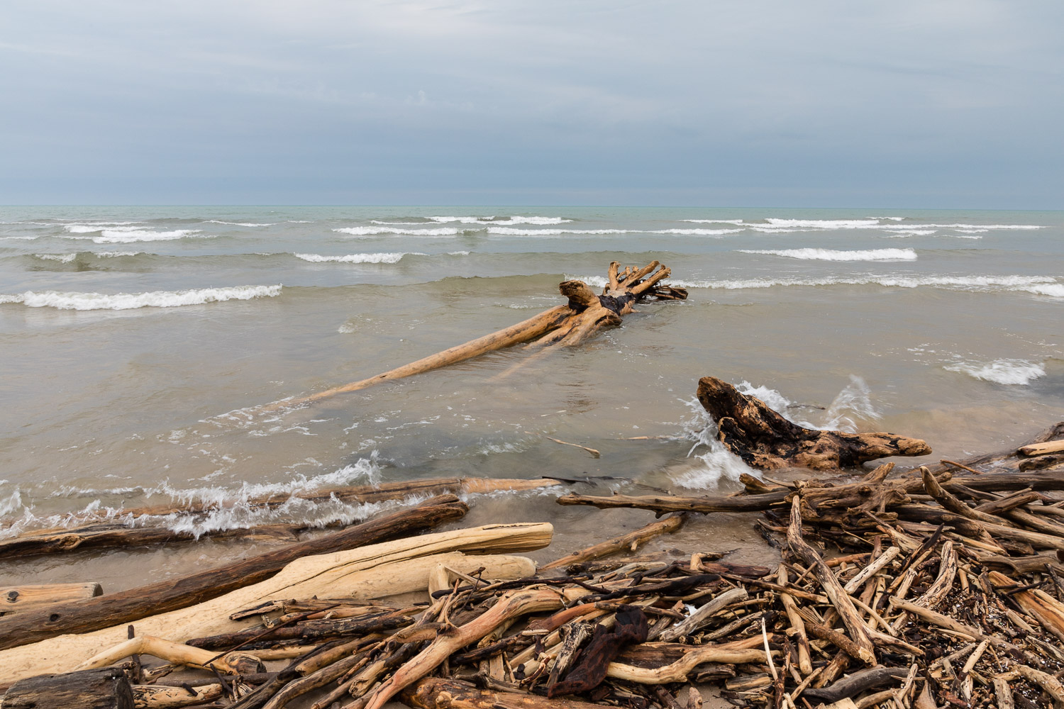Driftwood Building up on Shore