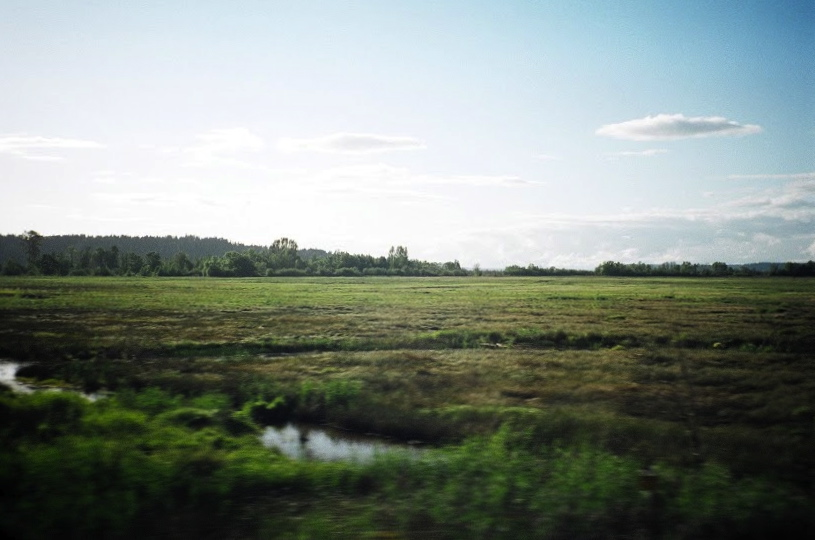 Marshscape, Washington, 2010